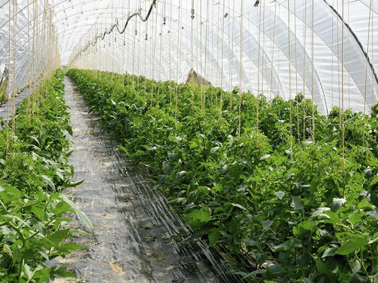 Vivaio piante da esterno